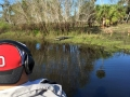 Airboat_tour_rides_Florida_alligators_543
