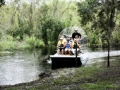 Airboat_tour_rides_Florida_alligators_best