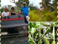 Airboat_tour_rides_Florida_alligators_george_puntagorda