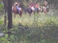 florida_horse_back_trail_tours261