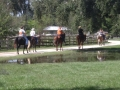 florida_horse_back_trail_tours263
